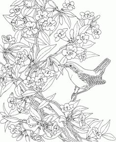 Free Printable Coloring Page South Carolina State Bird And 256274