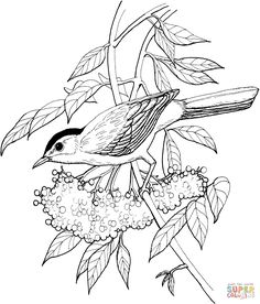 Catbird Coloring Page From Category Select 27420 Printable Crafts Of Cartoons Nature