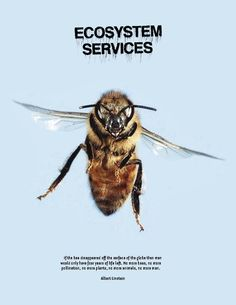 """Einstein said this:  """"If the bee disappeared off the surface of the globe then man would only have four years of life left. No more bees, no more pollination, no more plants, no more animals, no more man."""""""