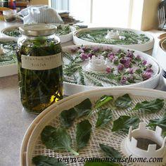 Homegrown Medicinals @ Common Sense Homesteading