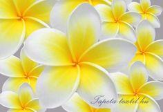Virágok vlies poszter, fotótapéta 033VE- több méretben
