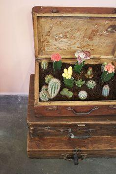 Che cactus!