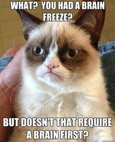 Grumpy quotes, grumpy cat humor, grumpy cat meme, funny grumpy cat quotes ...For the best humor and hilarious memes visit www.bestfunnyjokes4u.com/lol-best-funny-cartoon-joke-2/