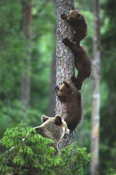 Three little bears {<3}