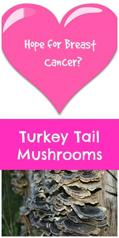 1000+ images about Healing Cancer Naturally on Pinterest | Cancer Cells, Cancer and Breast Cancer