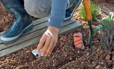 Tipps für die Gemüse-Aussaat im Freiland