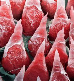 A-microscopic-image-of-a-human-tongue.jpg (800×884)