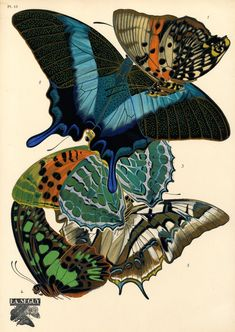 Papillons. Plate 13 by Eugène Alain Séguy  | Print from one of the most spectacular and famous Art Deco works, E.A. Séguy's portfolio of 20 vibrant pochoir prints illustrating designs based on the pattern of butterflies. These images are all from the collection of North Carolina State University, who have made them available online at very high resolution.