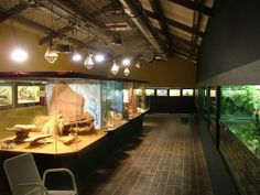 Reptile Room at Darmstadt