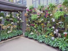 orchids on wall - Google Search