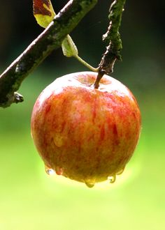 Apple in the rain by Diane