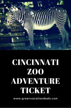 Looking for things to do in Cincinnati? With the Cincinnati Zoo Adventure Ticket you have access to popular attractions like the Conservation Carousel, Special FX Theater & more! Us Travel Destinations, Family Vacation Destinations, Vacation Deals, Family Vacations, Family Road Trips, Road Trip Usa, Zoos In Ohio, Cincinnati Zoo, Thailand Travel