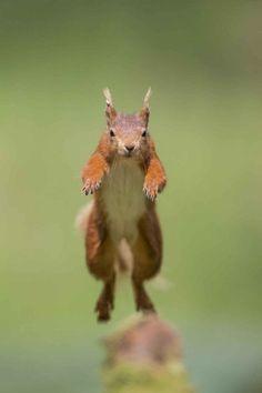 The ninja squirrel