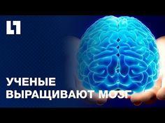 INC News Commentary: Русские ученые научились выращивать клетки мозга