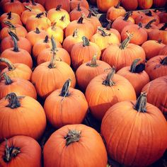 Where to Pick Your Own Pumpkins in Massachusetts