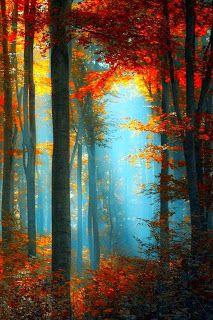 Las Fotos Mas Alucinantes: bosques