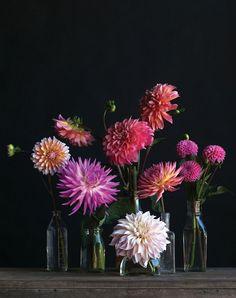 Dahlia Arrangement Recipe (How-To) Peony Arrangement, Floral Arrangements, Ikebana, Deco Floral, Floral Design, Fresh Flowers, Beautiful Flowers, Dahlia Flowers, Cut Flowers