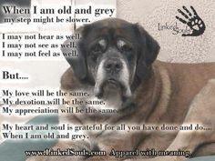 senior dogs...