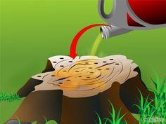 Kill a Tree Stump Step 7.jpg