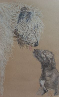 Browse unique items from ArtbySandraZereike on Etsy, a global marketplace of handmade, vintage and creative goods. Bedlington Whippet, Polychromos, Irish Wolfhound, Gentle Giant, Dog Paintings, Beautiful Dogs, Dog Art, Watercolor, Drawings