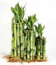 8 ways to usher the good vibes into your home 5. Add lucky leaves! According to the principles of feng shui, a lucky bamboo plant attracts auspicious chi energy. Try placing one near your front door and bunching multiple sticks together in one vase for even more good vibes.