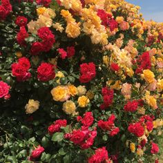 - Things that don't belong anywhere else - Blumenkranz Haare Nature Aesthetic, Flower Aesthetic, Flower Meanings, Plants Are Friends, No Rain, Gras, Aesthetic Wallpapers, Mother Nature, Planting Flowers