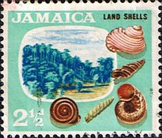Jamaica 1964 Shells Fine Mint SG Scott 220 Other West Indies and British Commonwealth Stamps HERE!