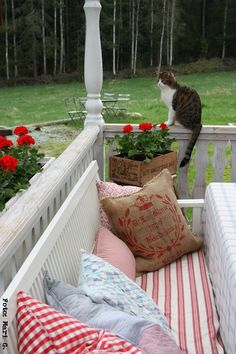sweet porch with cat