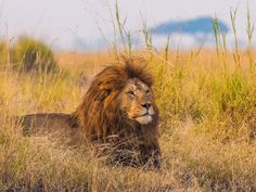 Insider's tip for lion-spotting: Skip the national parks and head to more remote…
