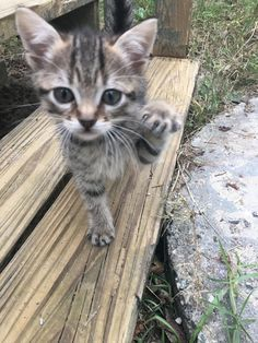 Overly Cute Kittens To Brighten Your Day 13