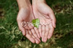 Hands Holding Heart Shaped Green Leaf Stock Image - Image of garden, green: 34702933 Hands Holding Heart, Hack My Life, Leaf Images, Super Powers, Green Leaves, Painting Inspiration, Heart Shapes, Hold On, Investing