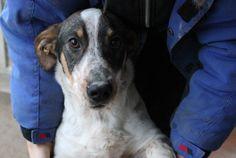 Micky: adopted last week! /Adottato settimana scorsa! Evviva!