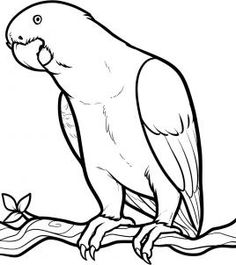 Seahorse Coloring Page More See How To Draw An African Grey Parrot Step 7