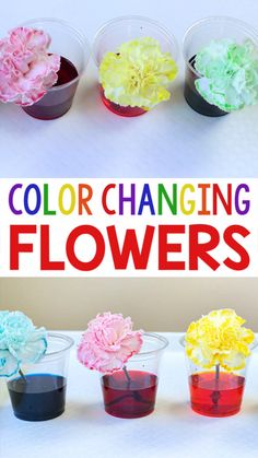 I just love this color changing flowers science experiment! It is really easy to do and the kids love watching the flowers change color. We think it is the perfect science activity for spring! Science Experiments For Preschoolers, Preschool Science Activities, Science Projects For Kids, Cool Science Experiments, Spring Activities, Science For Kids, Crafts For Kids, Science Centers, Science Classroom