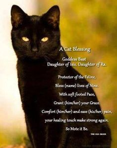 Wiccan, cat blessing