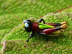 Andreas Kay's unbelievable grasshopper photos. ... - Radiolab