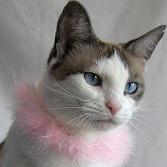 Spun Sugar - Boa Pet Collar 1 of 6