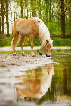 I'd love to have a natural pool for the horses to drink from and trees to protect them from the sun and rain