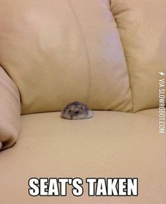 Do you have a cat and want a hamster here is a video on hamsters with cats ! you… Do you have a cat and want a hamster here is a video on hamsters with cats !be/RF-RT_PVHMI Cute Animal Memes, Funny Animal Quotes, Animal Jokes, Cute Animal Pictures, Cute Funny Animals, Funny Cute, Baby Pictures, Funny Pictures, Funny Pics