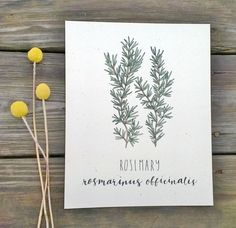 Rosemary Art Print Herb Art Print Art for by ChampaignPaper