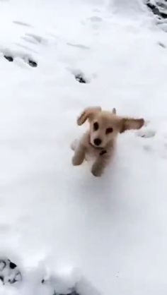 Snow snow snow so much snow cute puppy videos, cute animal videos Cute Funny Animals, Cute Baby Animals, Funny Dogs, Animals And Pets, Cute Puppies, Cute Dogs, Cute Babies, Small Puppies, Cute Puppy Videos