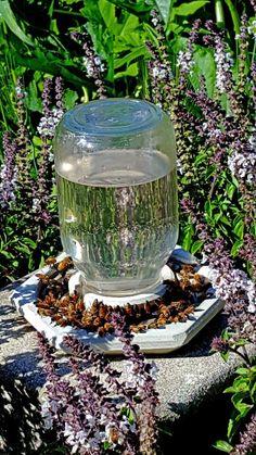 Round Top Beekeeper Rapid Bee Hive Feeder Drink Water Bowl Beekeeping Tool Use