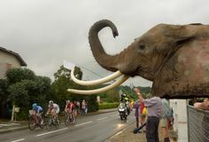 Stage 19: Maubourguet Pays du Val d'Adour - Bergerac 208.5km! Sometimes at the Tour there are unexpected supporters along the road ...