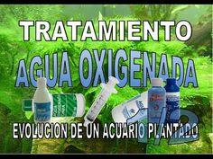 Tratamiento agua oxigenada capitulo1/2.Evolucion de un acuario plantado PARTE :8.1 - YouTube