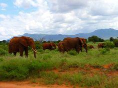 Impressionen aus Kenia Weitergabe mit Namensnennung