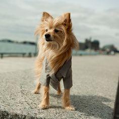 The Crew Dog Blazer