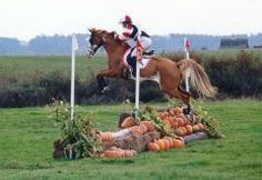 When I do get back into riding I want to try cross country :)