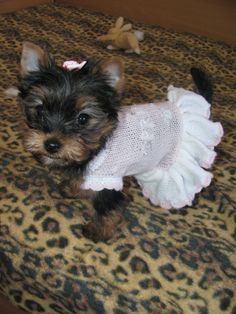 Dog dress puppy dress pink dog dress Princess designer dog