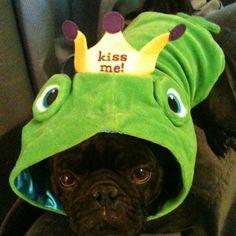 Dexter loves his frog costume
