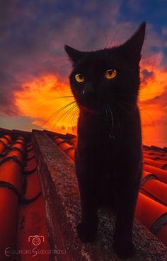 August 17 2016 Black Cat Appreciation Day